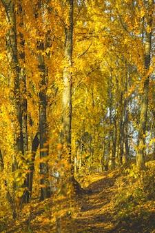 Jesienne drzewa w godzinach porannych.