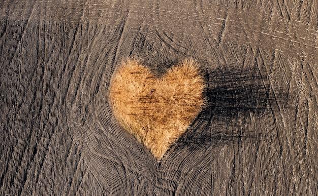 Jesienne drzewa w kształcie serca na zaoranym polu, widok z lotu ptaka