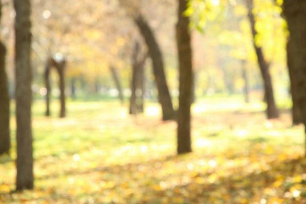 Jesienne drzewa w parku publicznym, niewyraźne