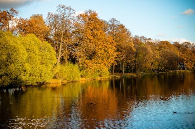 Jesienne drzewa w pobliżu jeziora w pochmurną, słoneczną pogodę, jesienny krajobraz malarski, wiele jesiennych drzew w parku przyrody w sankt petersburgu, rosja. sezon jesienny w parku miejskim