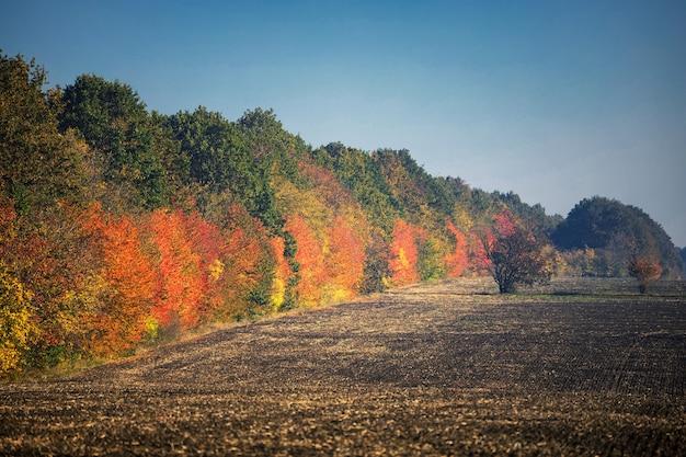 Jesienne drzewa wzdłuż pustego zaoranego pola