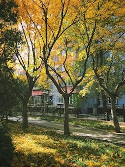 Jesienne drzewa z kolorowymi liśćmi w parku