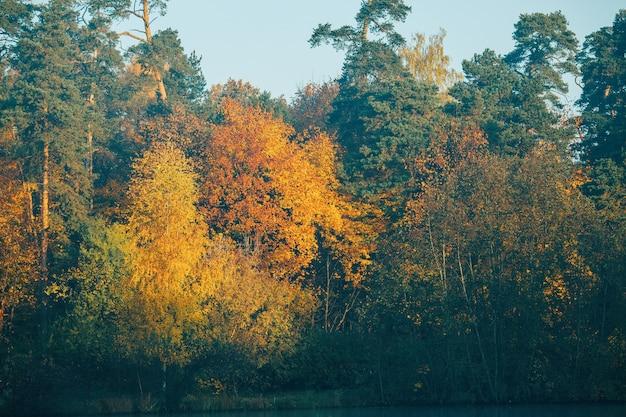 Jesienne drzewa z kolorowymi liśćmi.