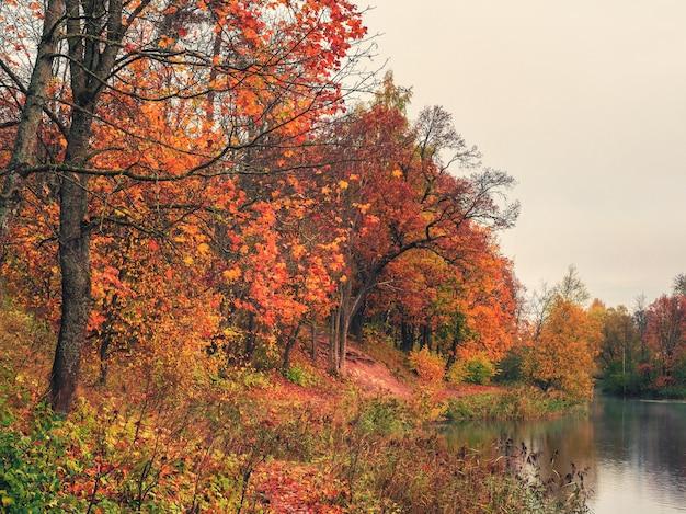 Jesienne drzewo nad stawem. rano jesień krajobraz z czerwonymi drzewami nad jeziorem.