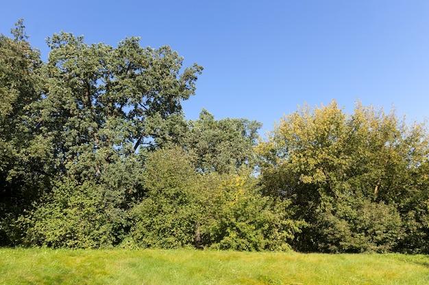 Jesienne drzewo z liśćmi, które zmieniły kolor w sezonie jesiennym, krajobraz drzew liściastych w okresie jesiennym podczas opadania liści, przyroda
