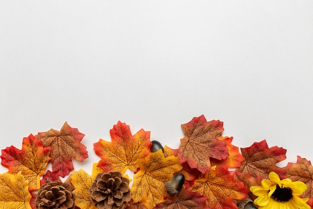 Jesienne elementy, takie jak liście, żołędzie i szyszki na dole obrazu na białym tle