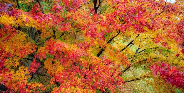 Jesienne gałęzie drzew