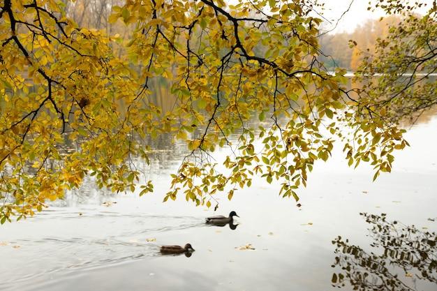 Jesienne gałęzie pochylają się nad rzeką