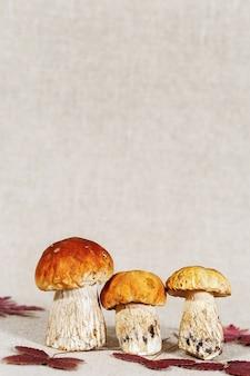 Jesienne grzyby cep z jesiennymi czerwonymi liśćmi