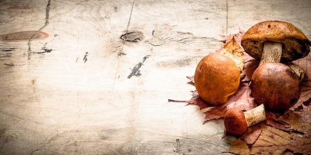Jesienne grzyby z liśćmi klonu. na drewnianym stole.