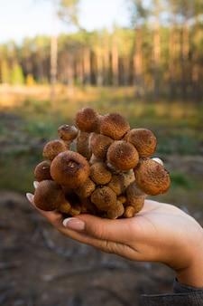 Jesienne grzyby. zbieranie grzybów w dzikim lesie. grzyby miodowe na pniu w lesie. grzyby miodowe w ręku grzybiarza. rodzina muchomorów miodowych.
