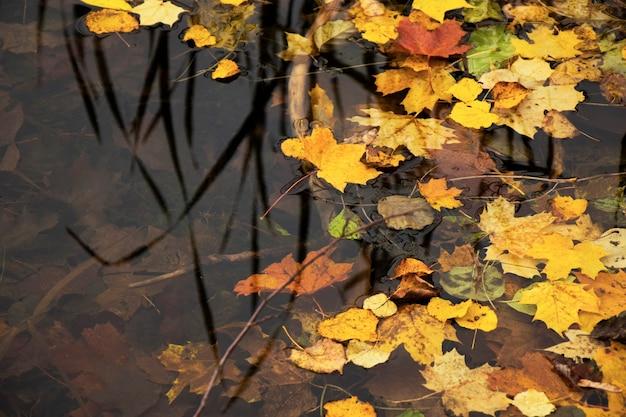 Jesienne i jesienne kolorowe liście w wodzie, cienie i światła, kolory żółty, reg, pomarańczowy i zielony na tle przyrody, troki, litwa.