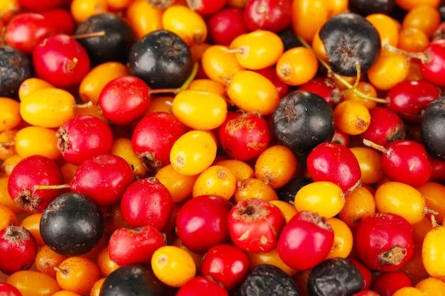 Jesienne jagody z bliska