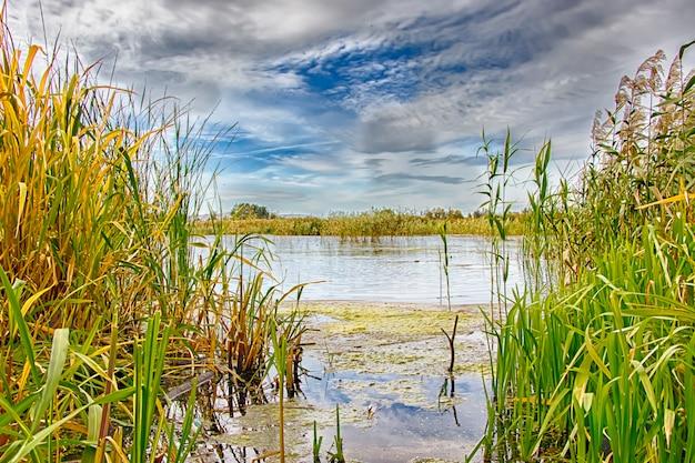 Jesienne jezioro w turzycy. relaks i relaks na plaży. białoruś. salihorsk.