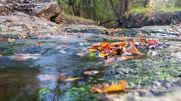 Jesienne kolorowe liście w wodzie