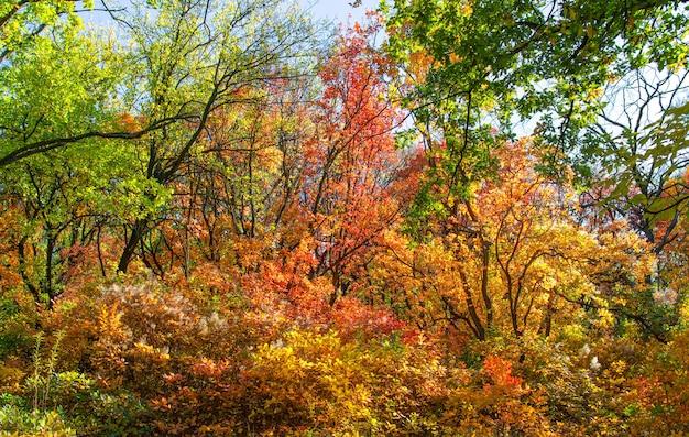 Jesienne kolory czerwony zielony żółty liście drzew las