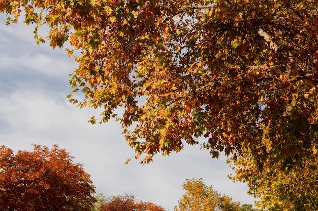 Jesienne kolory w liściach drzew.
