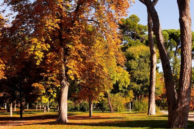 Jesienne kolory w parku z bujnymi drzewami i opadłymi liśćmi.