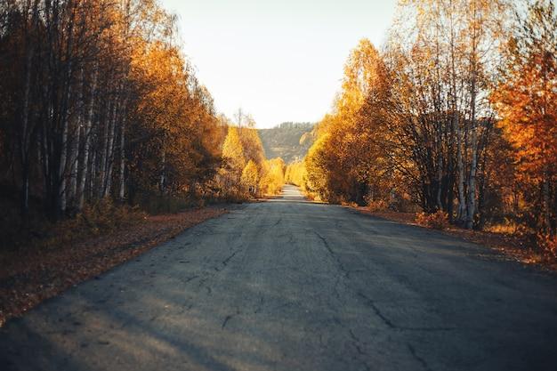 Jesienne krajobrazy wschodni kazachstan żółte drzewa leśne drewno wysokie góry altay