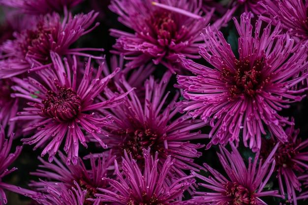 Jesienne kwiaty w tle