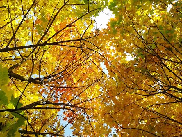 Jesienne liście drzew