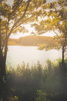 Jesienne liście i jezioro mgły rano. pionowy obraz z copyspace.