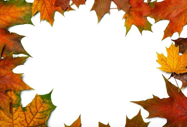 Jesienne liście izolują tło czerwone i żółte liście klonu jesienią na pustym białym tle h...