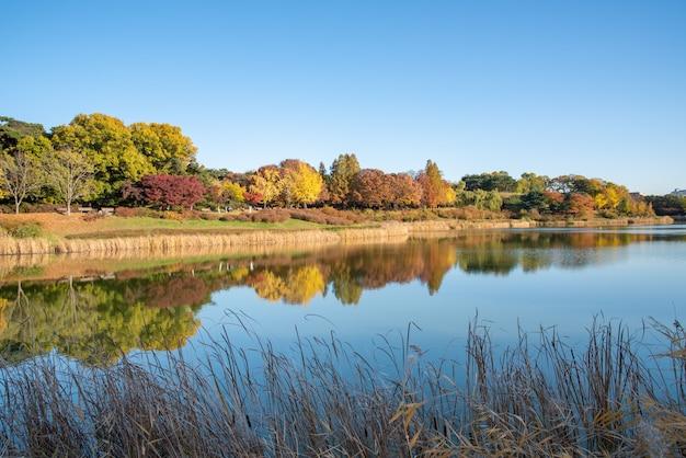 Jesienne liście. jesienne dekoracje. jezioro. seul olympic park w korei południowej.