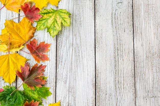 Jesienne liście klonu na białym drewnianym stole