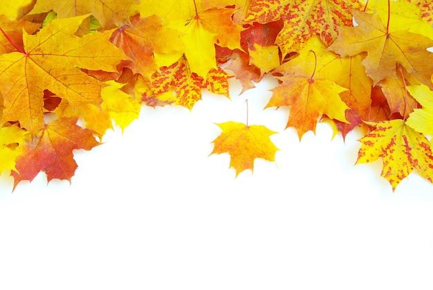 Jesienne liście klonu na białym tle