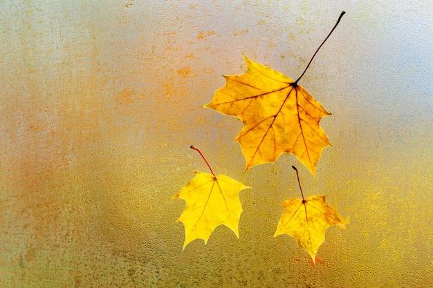 Jesienne liście klonu na szkle z naturalnymi kroplami wody