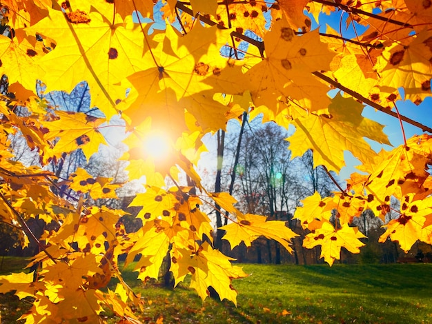 Jesienne liście klonu na tle nieba
