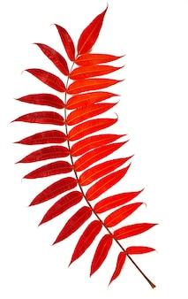 Jesienne liście klonu spadają na ziemię, na białej powierzchni