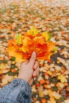 Jesienne liście klonu w ręce kobiety
