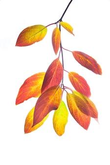 Jesienne liście klonu w tle