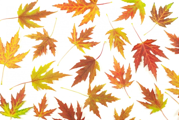 Jesienne liście klonu