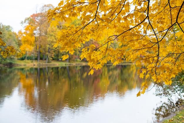 Jesienne liście kolorowe nad jeziorem z pięknym lasem