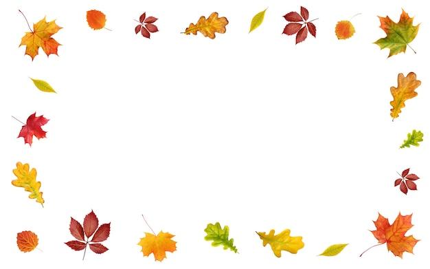 Jesienne liście na białej ścianie. ramka z żółtych, czerwonych i pomarańczowych liści klonu, dębu, osiki i innych drzew. puste miejsce na tekst w środku.