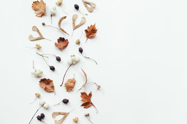 Jesienne liście na białym tle. jesienna, jesienna kompozycja. leżał na płasko, widok z góry, miejsce na kopię