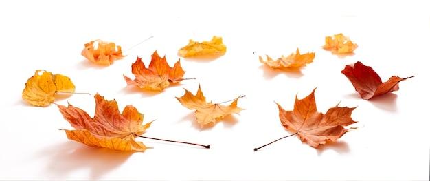 Jesienne liście na białym tle na białym tle