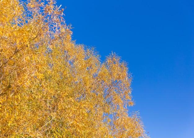 Jesienne liście na błękitnym niebie