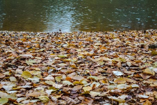 Jesienne liście na brzegu rzeki z wsady