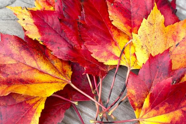 Jesienne liście na drewnianym tle powierzchni