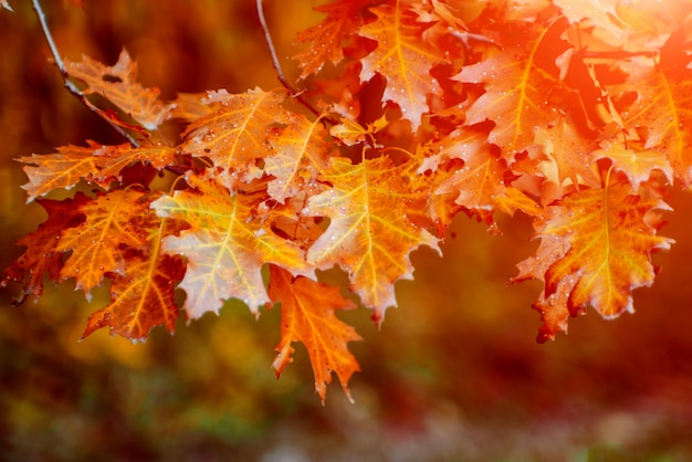 Jesienne liście na drzewach forrest.