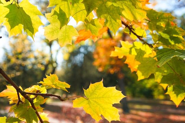 Jesienne liście na gałęzi w tle parku