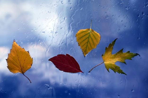 Jesienne liście na mokrym oknie na tle deszczowej pogody