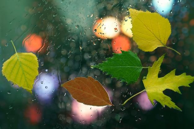 Jesienne liście na mokrym szkle w deszczową pogodę
