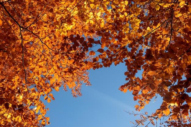 Jesienne liście na niebieskim tle nieba