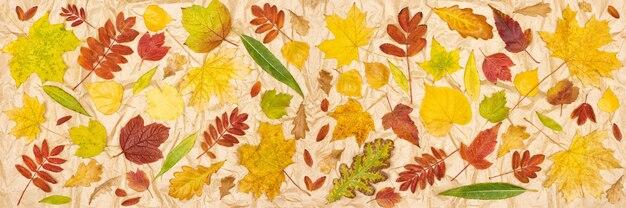 Jesienne liście na papierze pakowym kolorowe drzewo opadłych liści wzór tła transparentu sezonu jesiennego