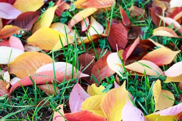 Jesienne liście na trawie